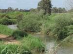 הקטנת הרגישות לשרפות ושיקום שטחי יער וחורש עירוניים-חקר מקרה חיפה- מסמך ועדת מומחים