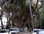 יחסי הציבור של העצים לא מספיק טובים- שחר צור